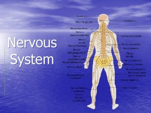 Nervous System Nervous System How did our nervous