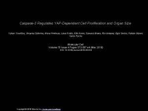 Caspase3 Regulates YAPDependent Cell Proliferation and Organ Size