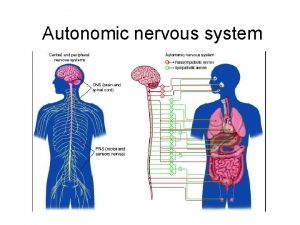Autonomic nervous system AUTONOMIC NERVOUS SYSTEM autonomic nervous