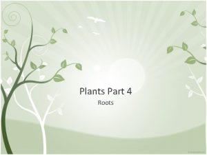 Plants Part 4 Roots Roots Serve 3 important