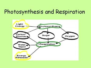 Photosynthesis and Respiration Photosynthesis CO 2 H 20