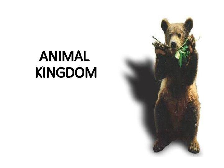 ANIMAL KINGDOM 5 Kingdom Classification System Kingdom Monera