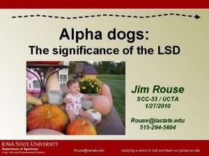 Alpha dogs The significance of the LSD Jim