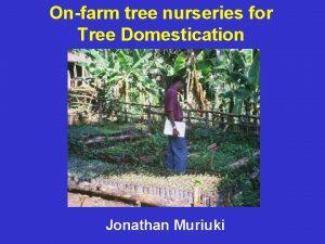 Onfarm tree nurseries for Tree Domestication Jonathan Muriuki