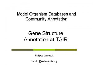 Model Organism Databases and Community Annotation Gene Structure
