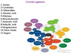 Growth regulators 1 Auxins 2 Cytokinins 3 Gibberellins