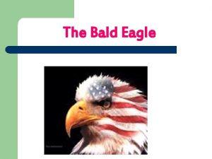 The Bald Eagle The Bald Eagle On the