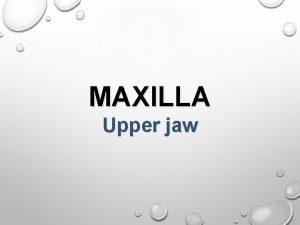 MAXILLA Upper jaw Anatomy Clinical notes Dentoalveolar topography