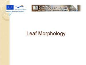 Leaf Morphology What Is Leaf Morphology is the