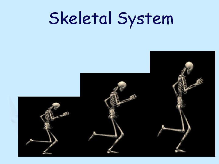 Skeletal System Skeletal System Videos Crash Course Skeletal