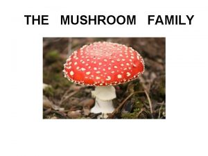THE MUSHROOM FAMILY Once upon a time there
