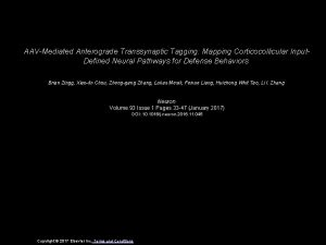 AAVMediated Anterograde Transsynaptic Tagging Mapping Corticocollicular Input Defined