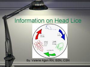 Information on Head Lice By Valerie Ajjan RN