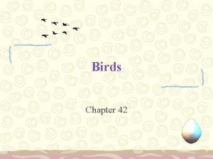 Birds Chapter 42 Origin and Evolution of Birds