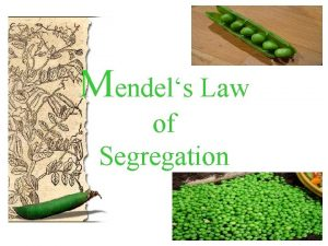Mendels Law of Segregation Georg Mendel Austrian monk