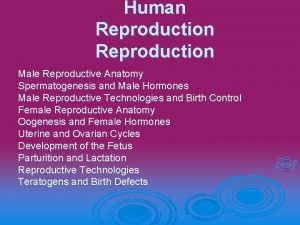 Human Reproduction Male Reproductive Anatomy Spermatogenesis and Male