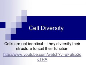 Cell Diversity Cells are not identical they diversify