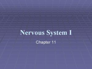 Nervous System I Chapter 11 Nervous System The