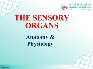 THE SENSORY ORGANS Anatomy Physiology Page 1 of