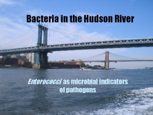 Bacteria in the Hudson River Enterococci as microbial