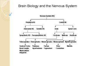 Brain Biology and the Nervous System Da Brain