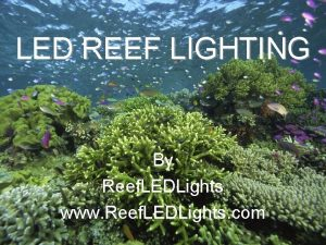 LED REEF LIGHTING By Reef LEDLights www Reef