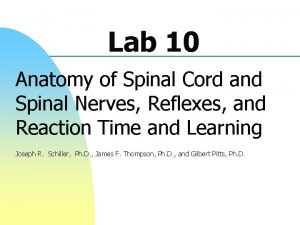 Lab 10 Anatomy of Spinal Cord and Spinal