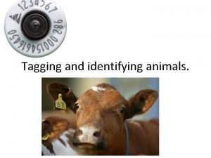 Tagging and identifying animals Why are animals tagged