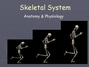 Skeletal System Anatomy Physiology The Skeletal System in