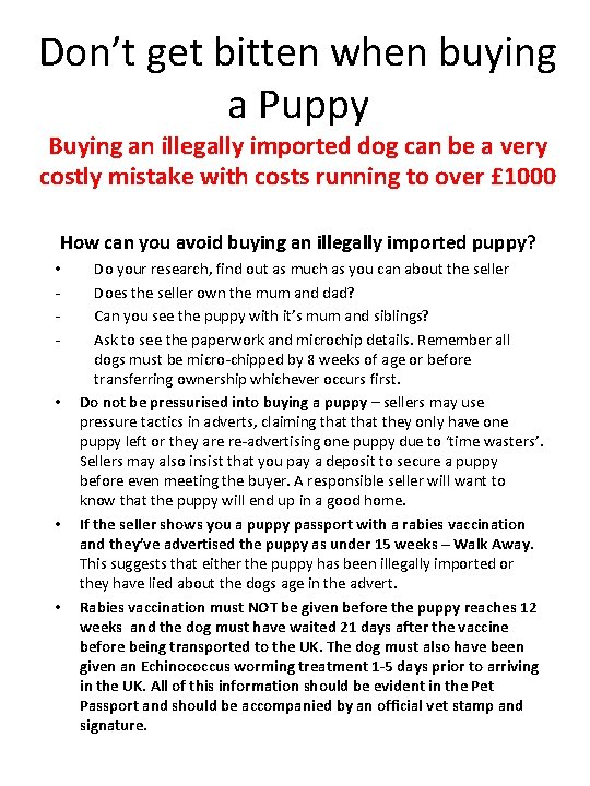 Dont get bitten when buying a Puppy Buying