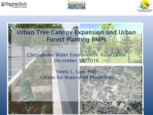 Urban Tree Canopy Expansion and Urban Forest Planting