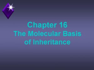 Chapter 16 The Molecular Basis of Inheritance Question