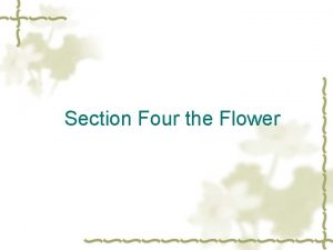 Section Four the Flower Part One Makeup and
