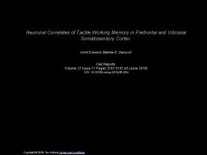 Neuronal Correlates of Tactile Working Memory in Prefrontal