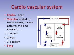 Cardio vascular system Cardio heart Vascularrelated to blood