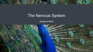 The Nervous System Biology for Majors Nervous Systems
