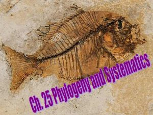 Phylogeny and Systematics Phylogeny evolutionary history of a