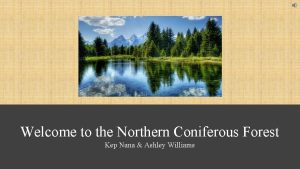 Welcome to the Northern Coniferous Forest Kep Nana