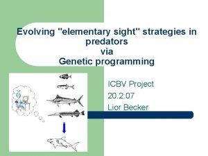 Evolving elementary sight strategies in predators via Genetic