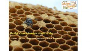 Abeilles Canaux ioniques et Insecticides P Charnet T