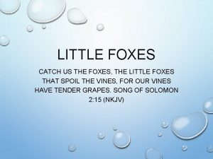 LITTLE FOXES CATCH US THE FOXES THE LITTLE