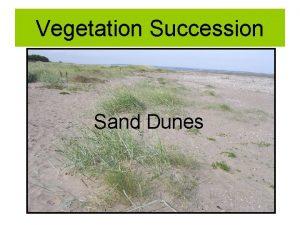 Vegetation Succession Sand Dunes Plant Succession Evolution of