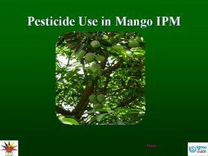 Pesticide Use in Mango IPM Next Background Quite