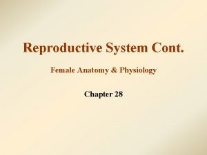 Reproductive System Cont Female Anatomy Physiology Chapter 28