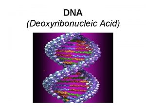 DNA Deoxyribonucleic Acid DNA DNA is often called