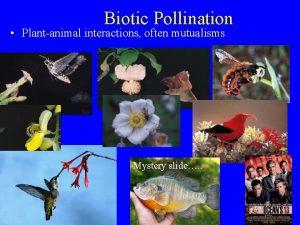 Biotic Pollination Plantanimal interactions often mutualisms Mystery slide