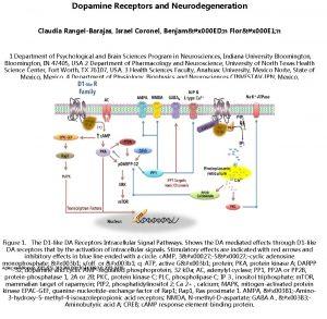 Dopamine Receptors and Neurodegeneration Claudia RangelBarajas Israel Coronel