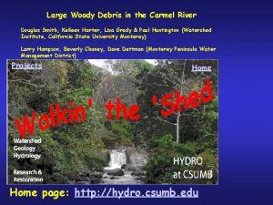 Large Woody Debris in the Carmel River Douglas