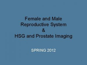 Female and Male Reproductive System HSG and Prostate