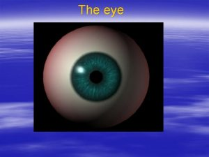 The eye Layers of the eye corneoscleral coat